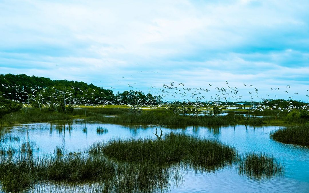 Saltmarshes and Love – The Heart Of the Lowcountry